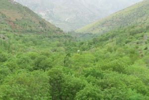 روستای دوریسان