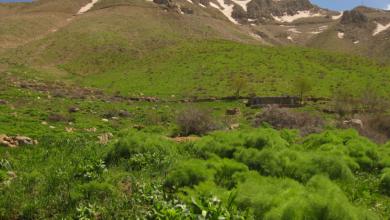 قله خان احمدخان