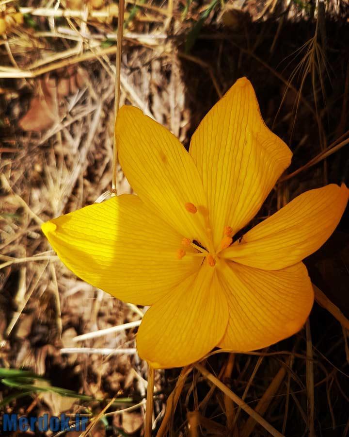یک گل زیبا - ده رون - دربند - گزنه / عکاس فارز مرادی