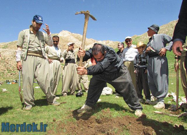 کاشت درخت در پیازدول