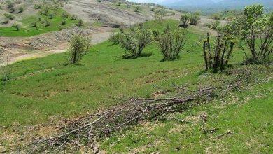 اجرای طرح ملی نهضت سبز در شهرستان پاوه