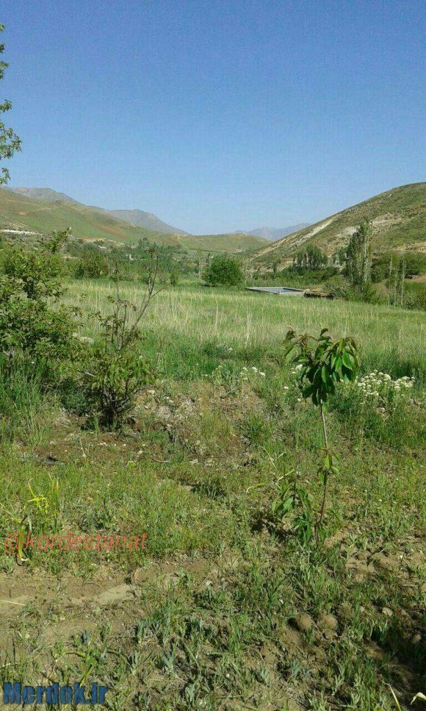 روستای نیە ر