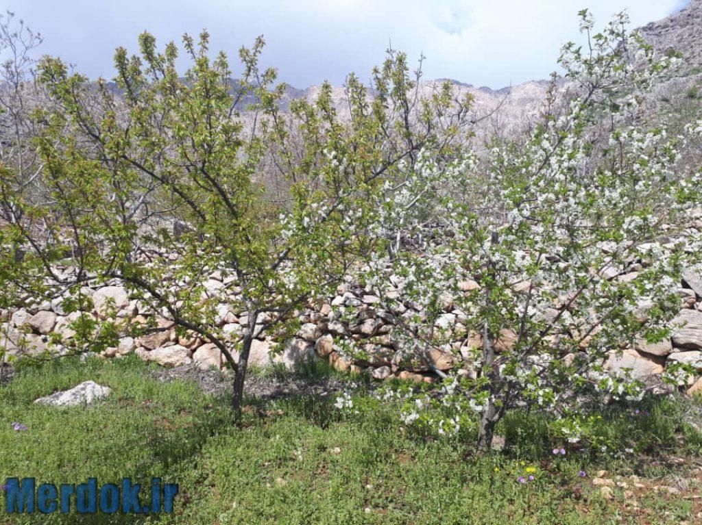 باغات زل - اردیبهشت 1399